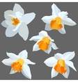 Narcissus isolated vector image