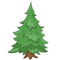 cartoon nature tree fir vector image