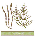 colored equisetum in hand drawn style vector image vector image