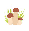forest porcini edible mushroom and growing grass vector image vector image