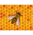 bee with honeycomb vector image vector image
