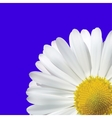 Daisy Flower On A Blue Background vector image vector image