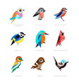 different birds set lilac breasted roller vector image vector image
