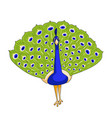 peacock bird icon vector image vector image