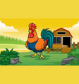 rooster and coop with cartoon style vector image vector image