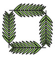 exotic and tropical leafs plants square frame vector image vector image