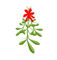 Hanging Lovely Green Mistletoe with A Red Bow vector image vector image