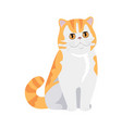 red exotic cat flat design vector image