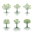 set trees and green leaves and roots vector image