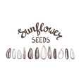 Sunflower seeds Poster Vintage Stylized Lettering vector image