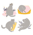 cute british shorthair cat collection 5 vector image vector image