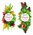 garden fruits grape with leaves isolated banner