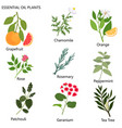 large set of popular essential oils from which vector image