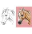 portrait beautiful welsh pony vector image