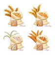 agricultural cereals - wheat barley oat and rice vector image vector image