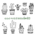 Hand drawn succulent and cactuse set Doodle vector image