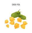 chick-pea small yellow seeds for fodder and food vector image vector image