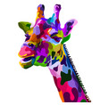 colorful giraffe head isolated on white background vector image vector image