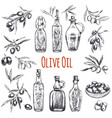 olives hand drawn engraved vector image