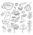 tea hand drawn isolated collection herbal plants vector image vector image