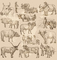 cattle animals - an hand drawn pack collection vector image