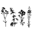 medical herbs set vector image vector image