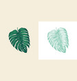palm plant tropical monstera exotic leaves vector image vector image