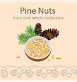 pine nuts image vector image