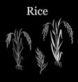rice plant hand drawn vector image vector image