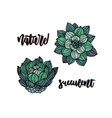 succulents flat hand drawn card vector image
