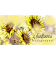 sunflowers watercolor background floral vector image