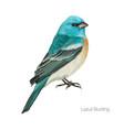 exotic blue cardinal bird vector image