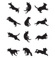 dogs in a jump vector image