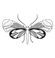 simple zentangle symmetric butterfly vector image