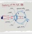 anatomy of the Eye vector image vector image