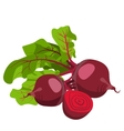 beetroot Healthy lifestile vector image vector image