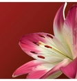 Pink Lily On Burgundy Background vector image vector image