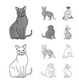 siamese and other species cat breeds set vector image vector image
