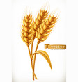 ear of wheat 3d icon vector image vector image