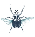 Hand drawn goliath beetle vector image
