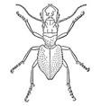 manticora tuberculata vintage vector image vector image