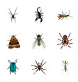 realistic housefly poisonous arachnid and other vector image