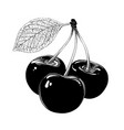 hand drawn sketch of cherry in black isolated on vector image