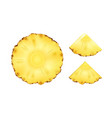 pineapple slices vector image
