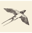Swallow Bird Engraved Sketch vector image