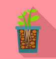 grow plant rock pot icon flat style vector image vector image