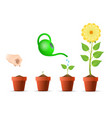 plant growing stages in pot vector image vector image