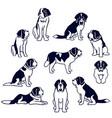 st bernard dogs vector image vector image