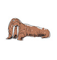 walrus hand drawn isolated icon vector image vector image