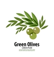 Green Olives logo design template harvest or food vector image